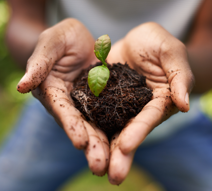 Cropped shot of a growing plant in a man's hands