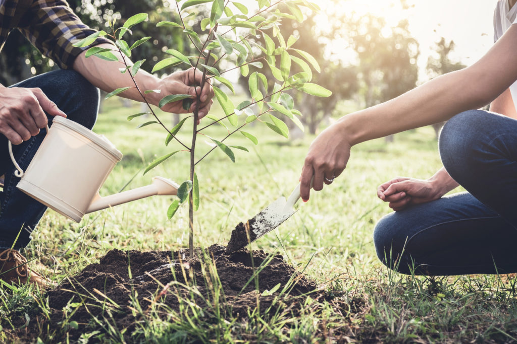 Young couple planting the tree while Watering a tree working in the garden as save world concept, nature, environment and ecology.